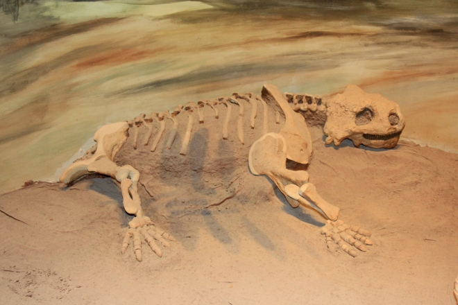 Pareiasauro