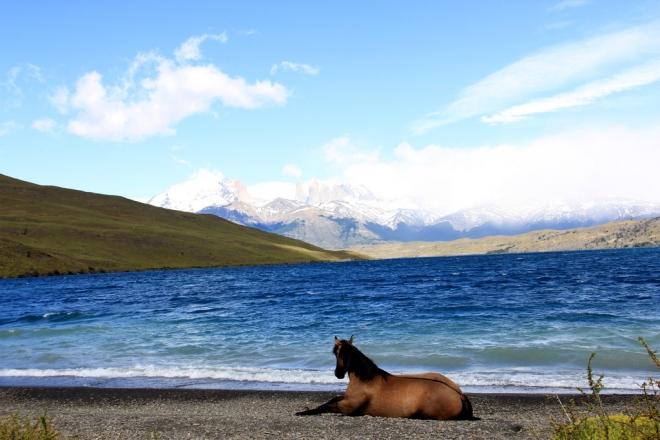 Torres Del Paine (16)